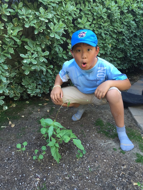 My son posting with the mystery plant!